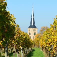 Weinspaziergang der Bürgerstiftung Talheim am 9. September 2018